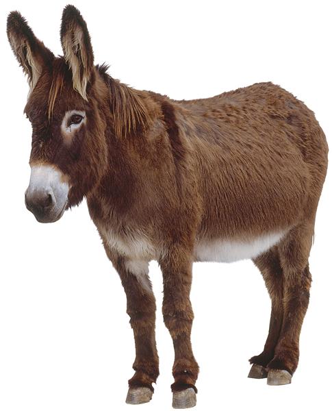 donkey-milk-1